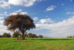 Campos verdes, cielo azul, árbol solo Imagen de archivo libre de regalías