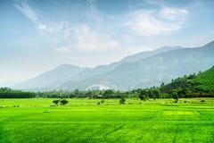Campos verdes claros del arroz Paisaje asombroso del verano Foto de archivo libre de regalías