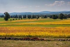 Campos verdes claros y amarillos en Gettysburg Foto de archivo