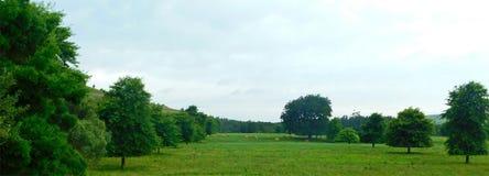 Campos verdes com árvores fotos de stock royalty free