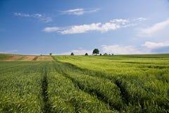 Campos verdes da mola com céu e nuvens da árvore Imagens de Stock Royalty Free
