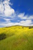 Campos verdes da mola e flor selvagem fotografia de stock royalty free