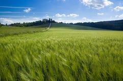 Campos verdes de Toscânia Fotografia de Stock
