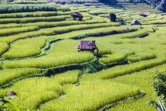 Campos verdes del arroz Fotos de archivo libres de regalías