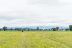 Campos verdes del arroz de arroz en Tailandia Foto de archivo libre de regalías