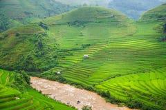Campos verdes del arroz en colgante Foto de archivo libre de regalías