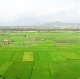 Campos verdes del arroz en sanya Imágenes de archivo libres de regalías
