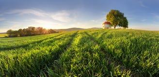 Campos verdes del trigo joven en una primavera fotografía de archivo libre de regalías