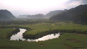 Campos verdes do amendoim perto dos montes da silvicultura na opinião aérea da névoa video estoque