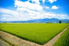 Campos verdes do arroz em Japão fotografia de stock royalty free