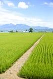 Campos verdes do arroz em Japão imagens de stock royalty free