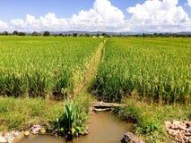 Campos verdes do arroz em Tailândia fotografia de stock royalty free