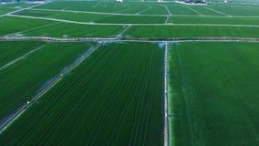 Campos verdes do arroz em Valência vídeos de arquivo