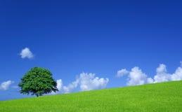 Campos verdes e árvore solitária Imagem de Stock Royalty Free