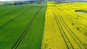 Campos verdes e amarelos da violação na primavera, vista aérea, Polônia video estoque