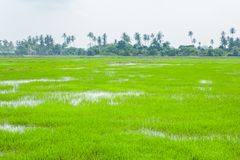 Campos verdes em Pulau Pinang fotos de stock royalty free