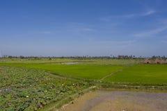 Campos verdes em um dia ensolarado com as cabanas cambojanas rústicas no fundo foto de stock