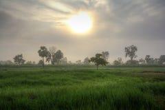 Campos verdes en la salida del sol imágenes de archivo libres de regalías