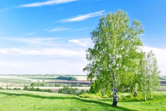 Campos verdes en resorte Imagen de archivo