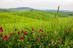Campos verdes en Toscana imagen de archivo libre de regalías