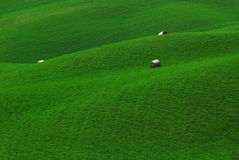Campos verdes en Toscana Foto de archivo libre de regalías