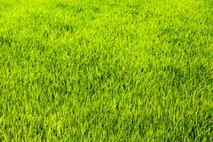 Campos verdes en verano Imágenes de archivo libres de regalías