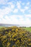 Campos verdes hermosos del condado kerry Imagenes de archivo