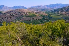 Campos verdes listrados da vinha no vale de montanhas rochosas cinzentas Imagem de Stock Royalty Free