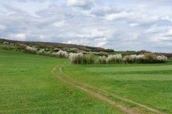 Campos verdes na mola Fotos de Stock