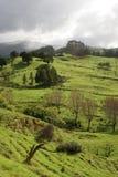 Campos verdes no montanhês Fotos de Stock