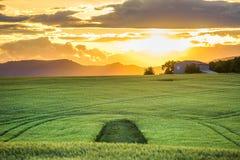 Campos verdes no por do sol em Provence Foto de Stock Royalty Free