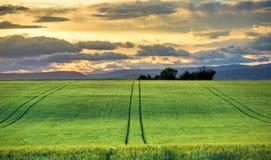Campos verdes no por do sol em Provence Fotos de Stock