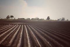 campos verdes foto de stock