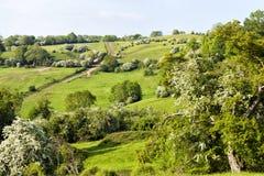 Campos verdes, prados em Rolling Hills em uma borda da floresta Fotografia de Stock