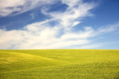 Campos verdes rodantes debajo de un cielo del verano Foto de archivo