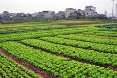 Campos verdes vietnamitas con la ciudad en el fondo Imagen de archivo libre de regalías