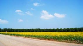 Campos verdes y amarillos Foto de archivo libre de regalías