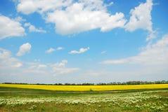 Campos verdes y amarillos bajo el cielo del verano Foto de archivo