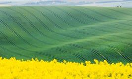 Campos verdes y amarillos con las líneas abstractas Fotos de archivo