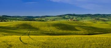 Campos verdes y amarillos de Toscana Fotografía de archivo libre de regalías