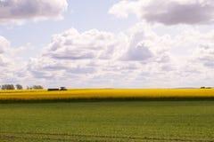 Campos verdes y amarillos en la primavera Imagen de archivo libre de regalías