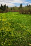 Campos y árboles amarillos. Sibir. fotografía de archivo libre de regalías