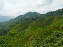Campos y bambúes del arroz Fotos de archivo