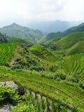 Campos y bambúes del arroz Fotografía de archivo