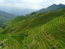 Campos y bambúes del arroz Fotos de archivo libres de regalías