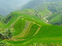 Campos y bambúes del arroz Foto de archivo