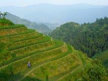 Campos y bambúes del arroz Foto de archivo libre de regalías