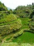 Campos y bambúes del arroz Imagen de archivo libre de regalías