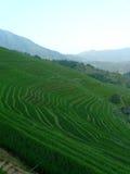 Campos y bambúes del arroz Imágenes de archivo libres de regalías