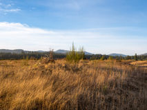 Campos y bosque de oro fotografía de archivo libre de regalías